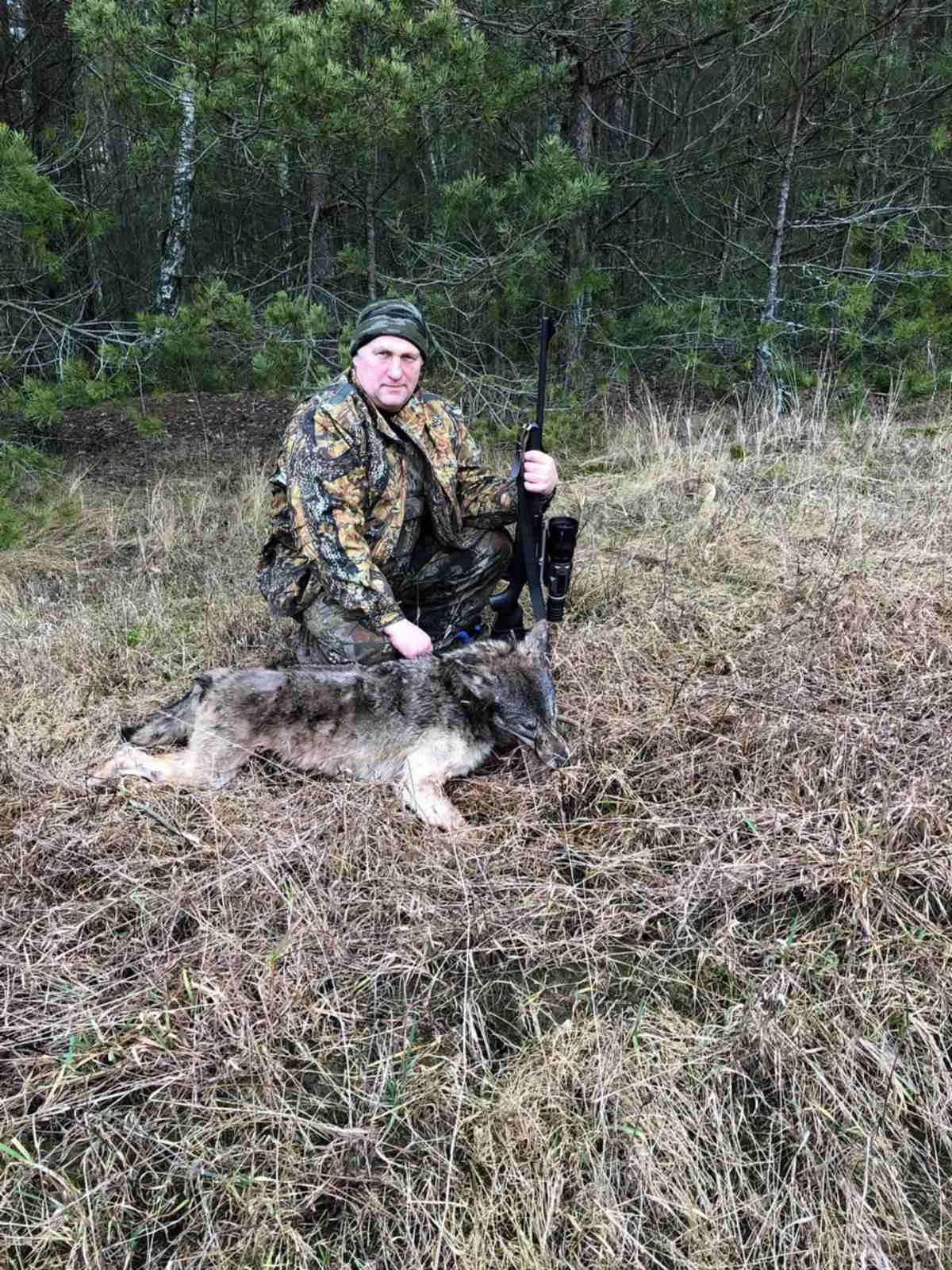 Охота на вабу, в январе 2020. Добыта волчица.
